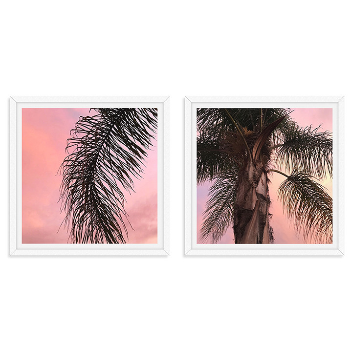 pink california sunset palm tree frond w