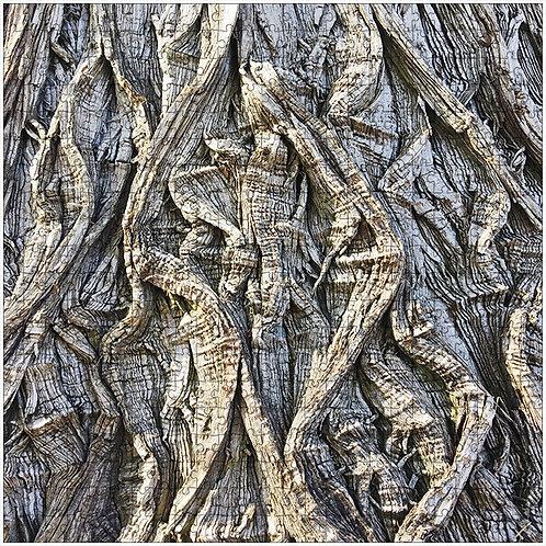 """""""Lizard Bark"""" - 500 Piece Fine Art Premium Puzzle"""