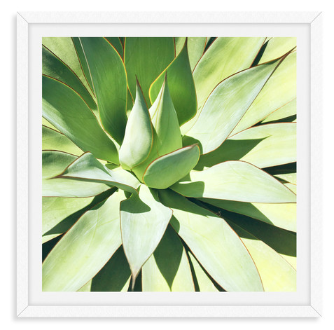 green aloe agave succulent wall art leas