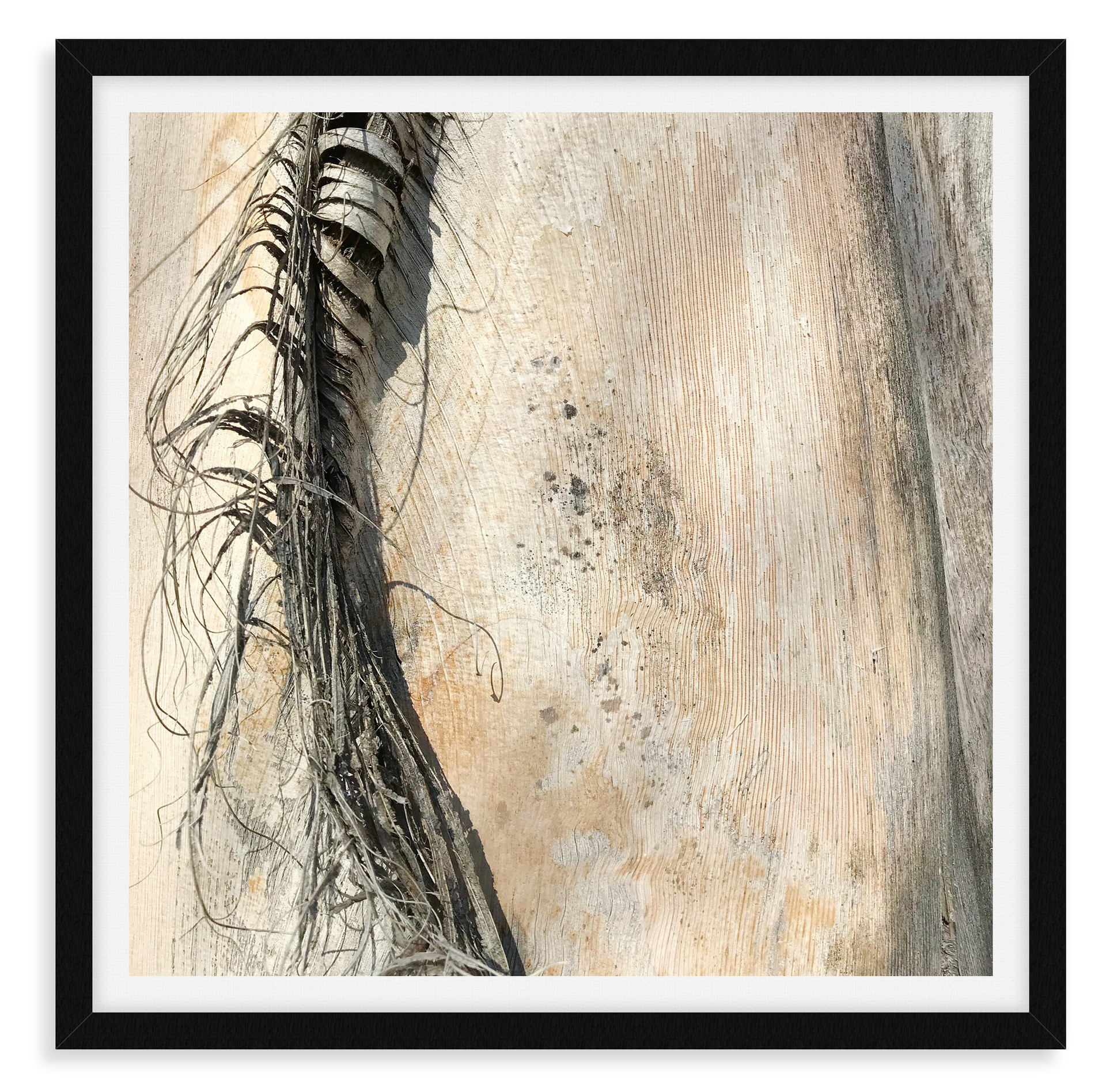 tree bark beige textured abstract horse