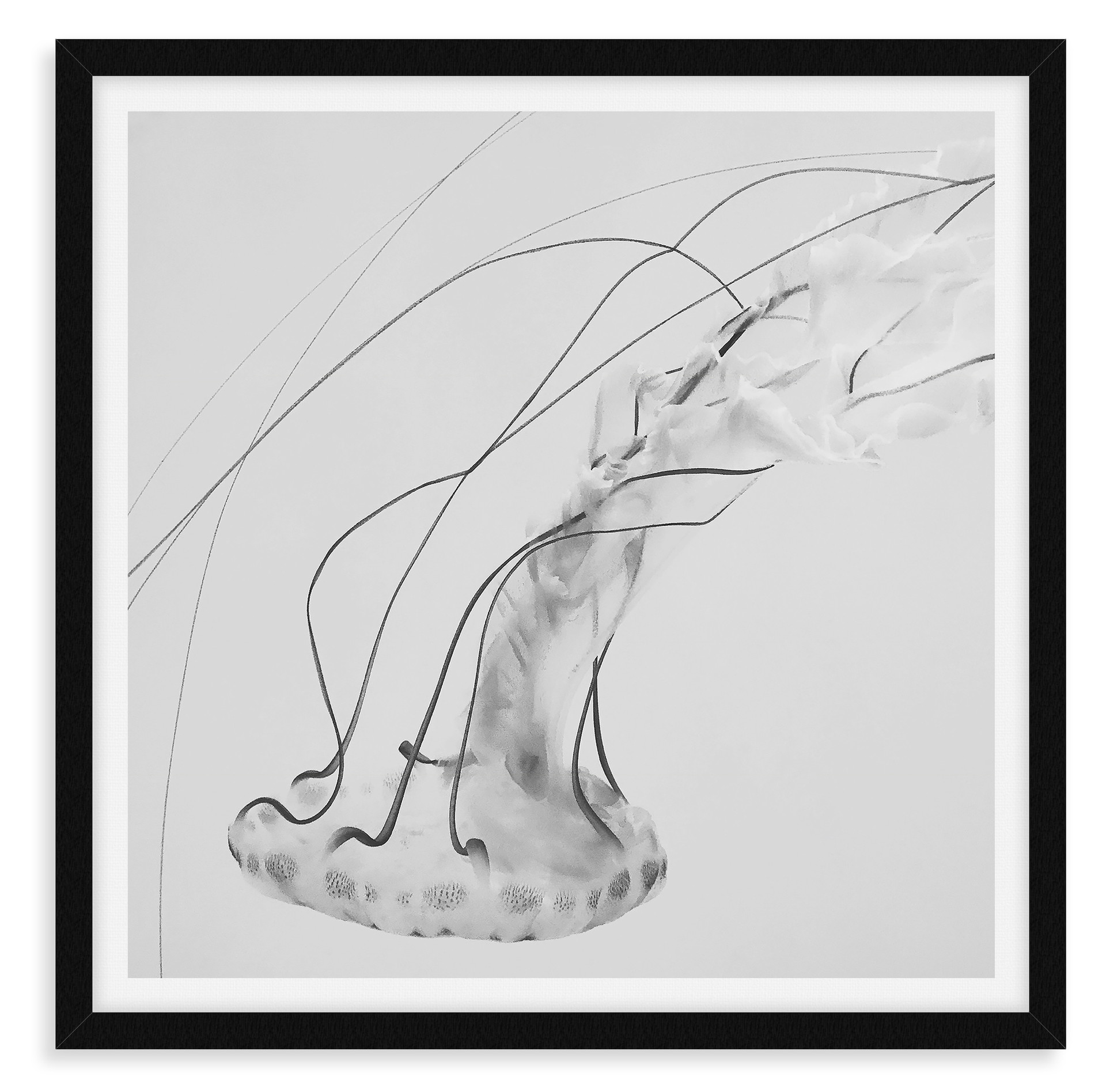 black and white jellyfish underwater wal