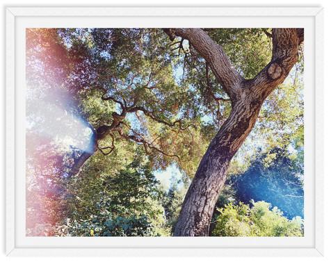 descanso garden trees forest sunlight wa