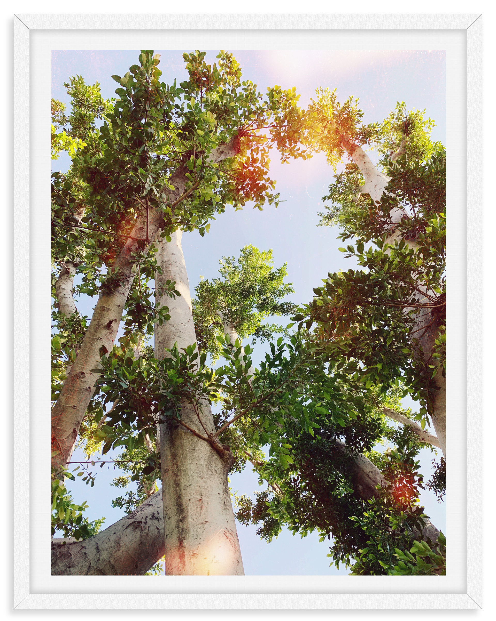 tree tops sunlight blue sky wall art lea