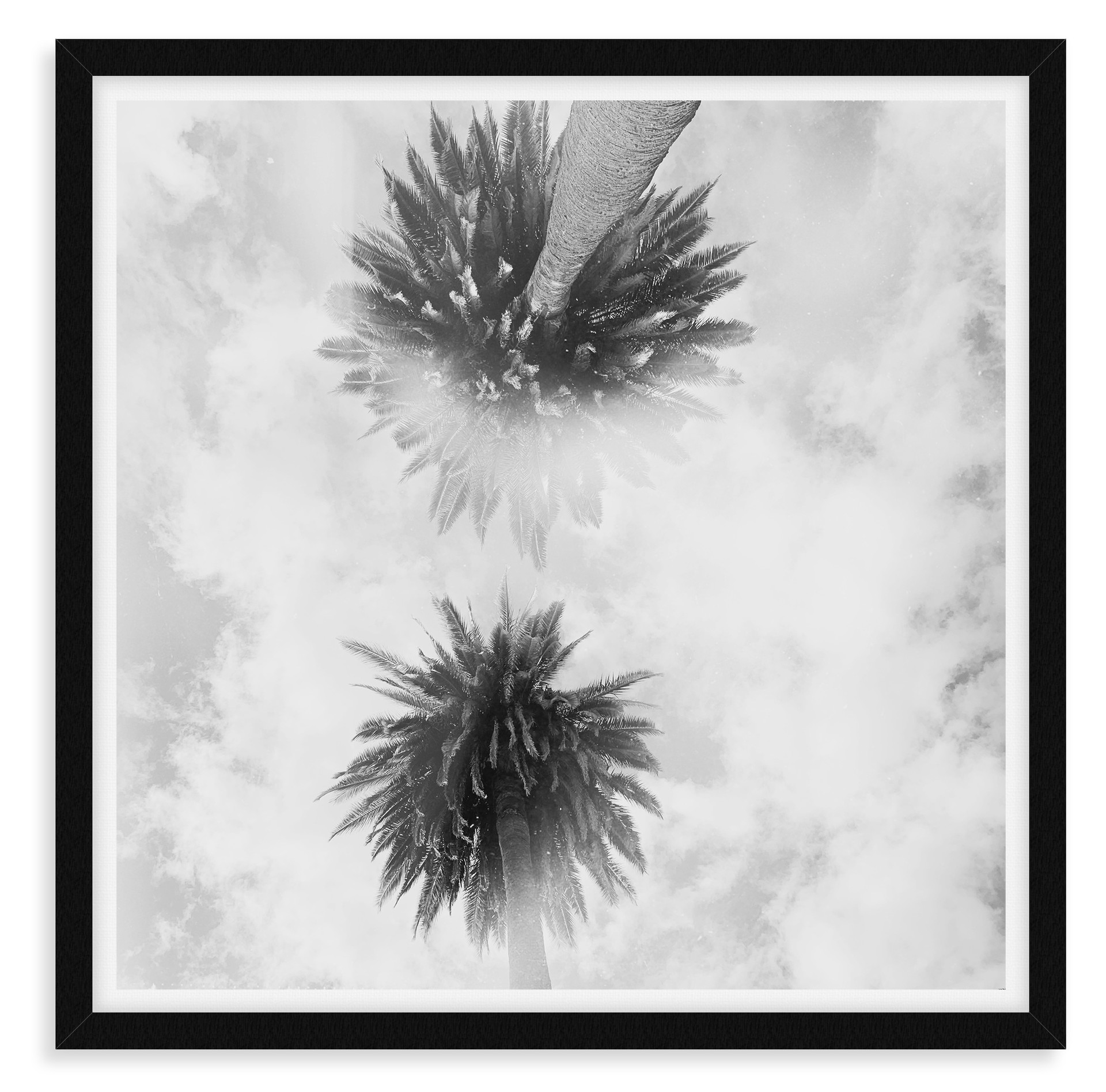 black and white heavenly palm trees abst