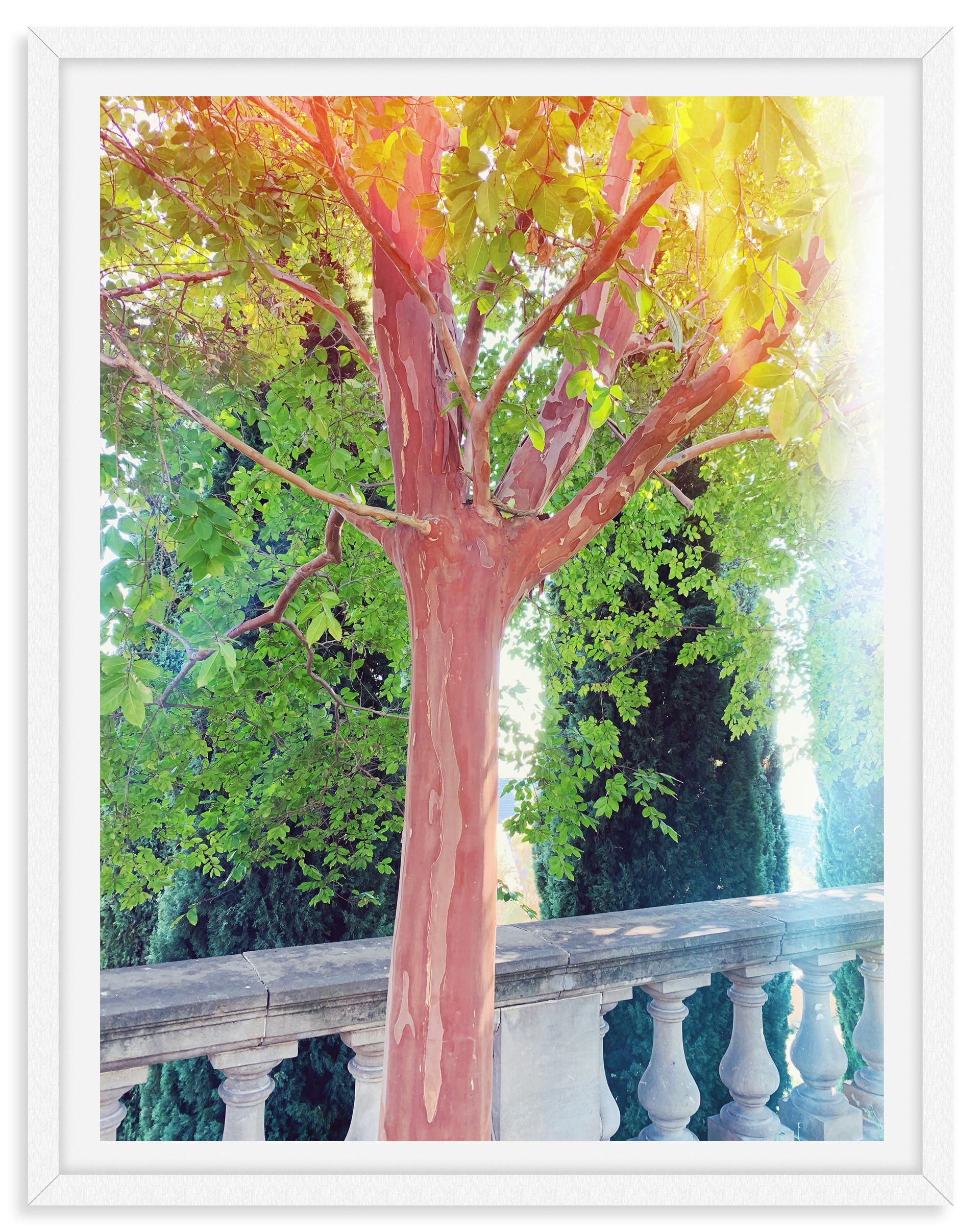 trees fall leaves sunlight garden wall a
