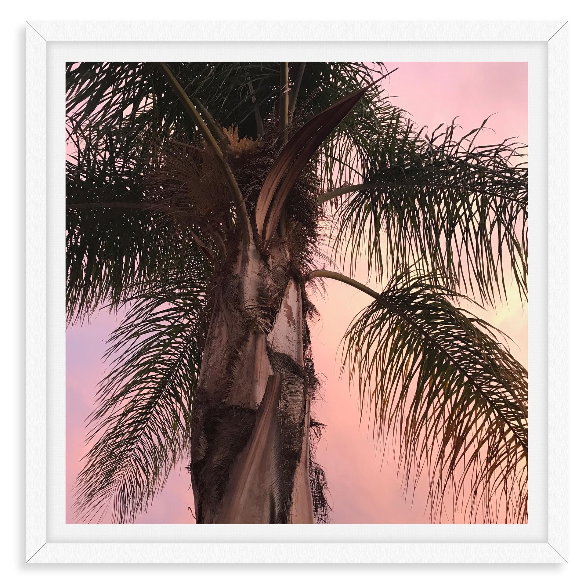 pink california sunset palm tree silhoue