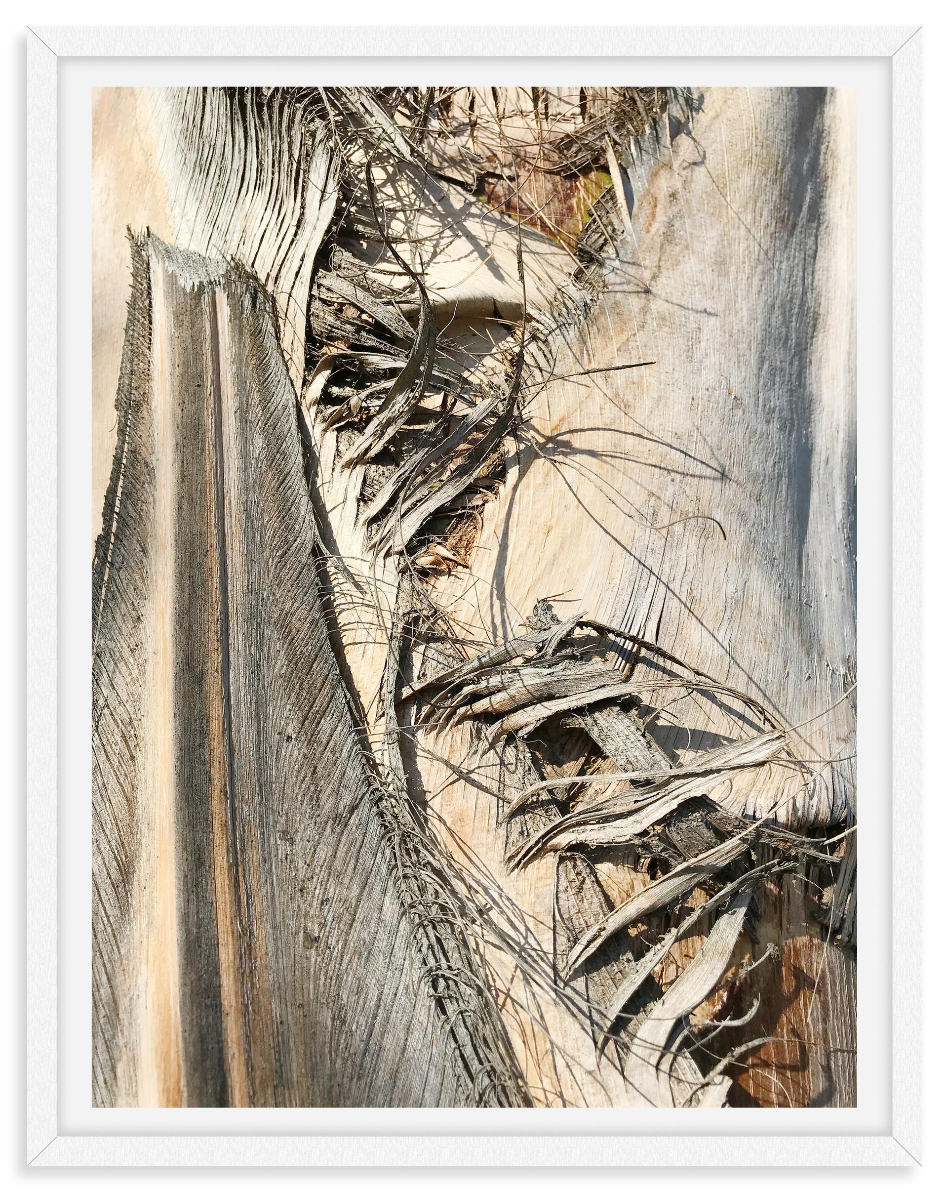 tree back close up macro abstract wall a