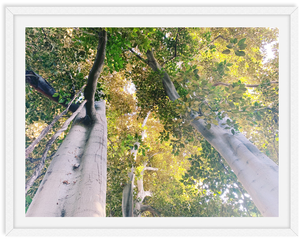 descanso garden forest tree tops wall ar