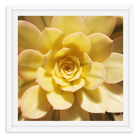 yellow geometric succulent wall art leas