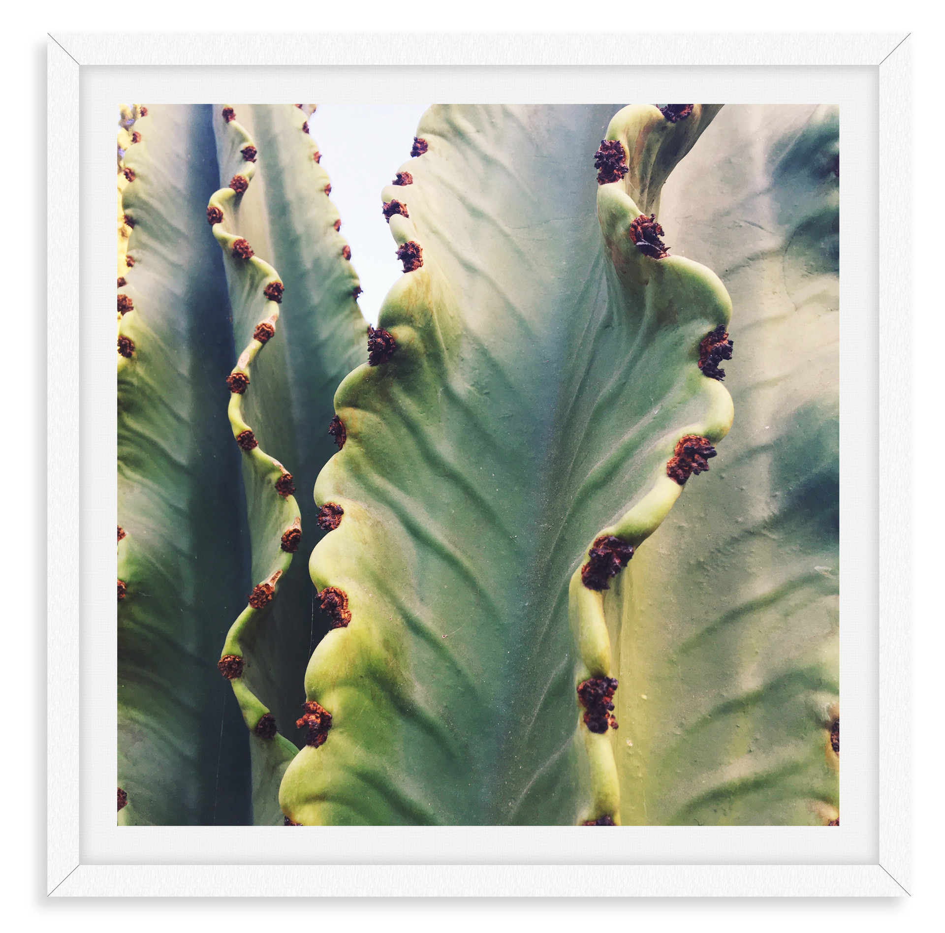 cactus desert green wall art leasing los