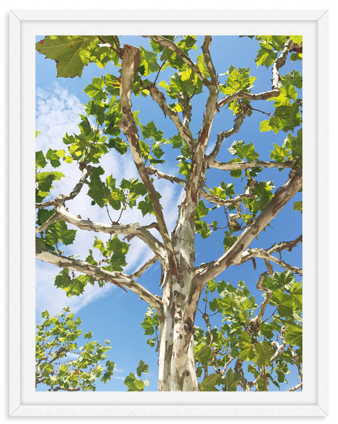 green leaves tree branches blue sky wall