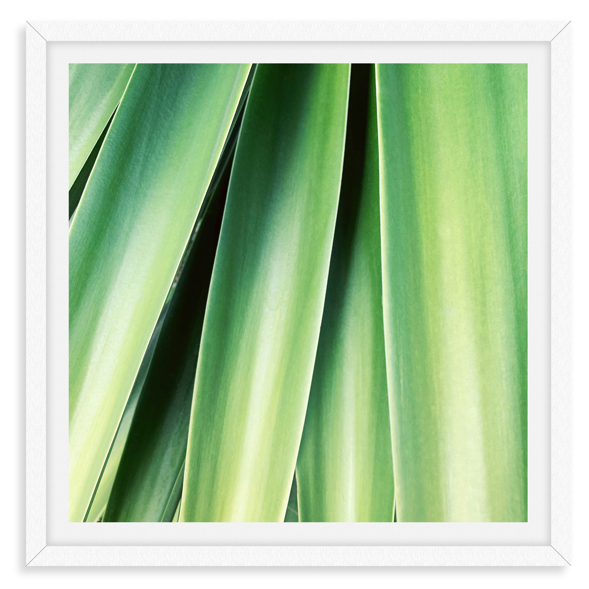 green aloe succulent still life wall art