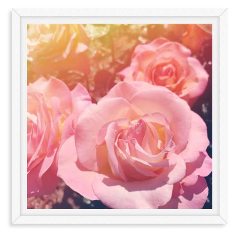 rose garden flowers dreamy pink wall art