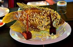 Nefis Balık - Vietnam