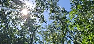 trees-M-H2.jpg