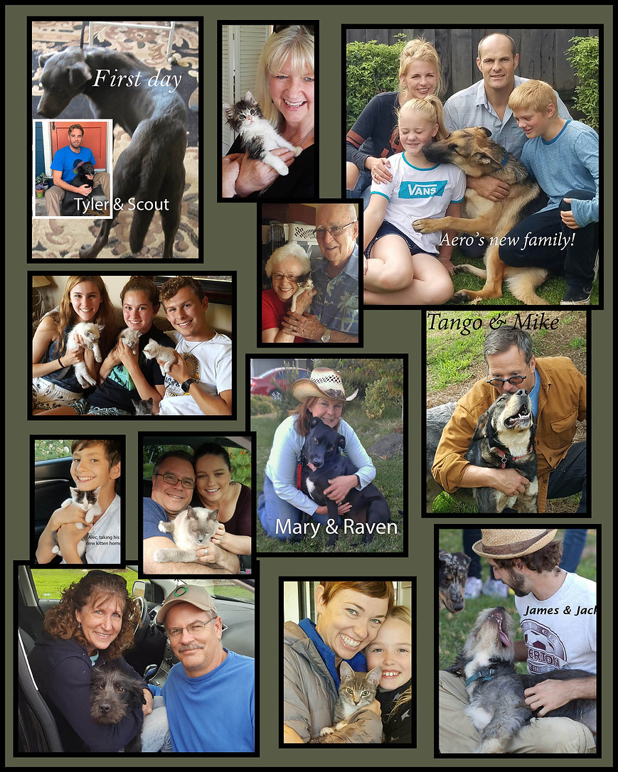 Adoptions1.jpg