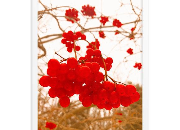 Grandma's Cranberry Tree Framed poster