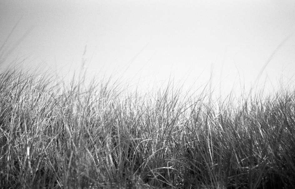 Lake Huron Grasses