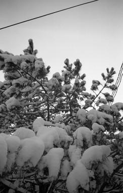 December in Guelph.jpg