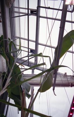 Greenhouse_