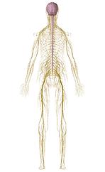 Marco Mazzanti rieducazione posturale