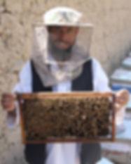 Bees and honey.jpg