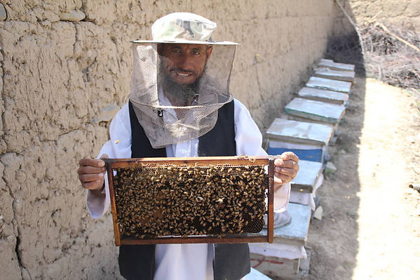 Bees and honey.jpg