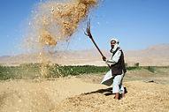 Throwing hay.jpg