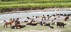 Animals at the river.jpg