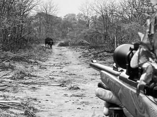 Late Season non-trophy buffalo hunt.