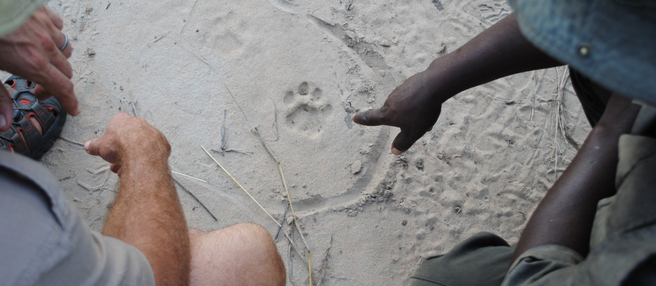 Judging Leopard Spoor