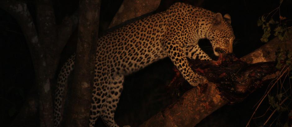 Calibres for Leopard