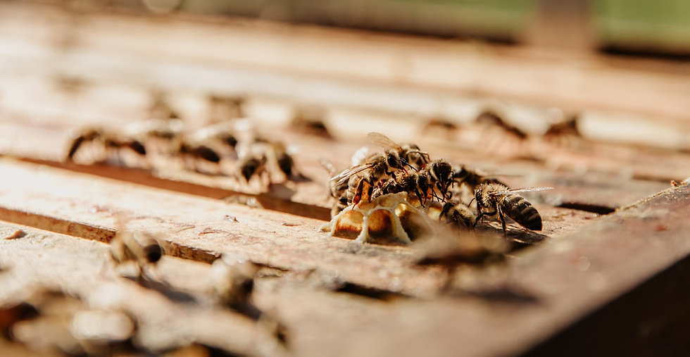 Bees make honey in a hive