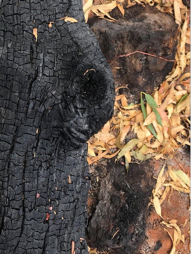 Damage fromthelast bushfire in Budj BimPark.