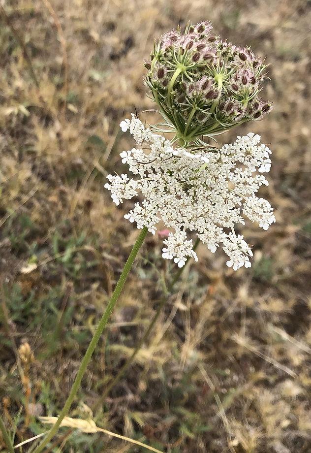 White local flower