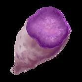 An illustration of a Ube, purple yam, cut in half