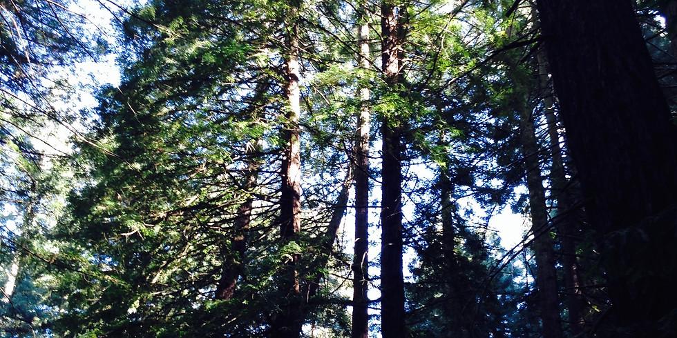 Autumn: Redwood
