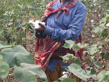 BESTSELLER - New measures to secure future organic cotton