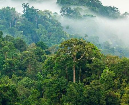 Biodiversity In The Amazon Rainforest