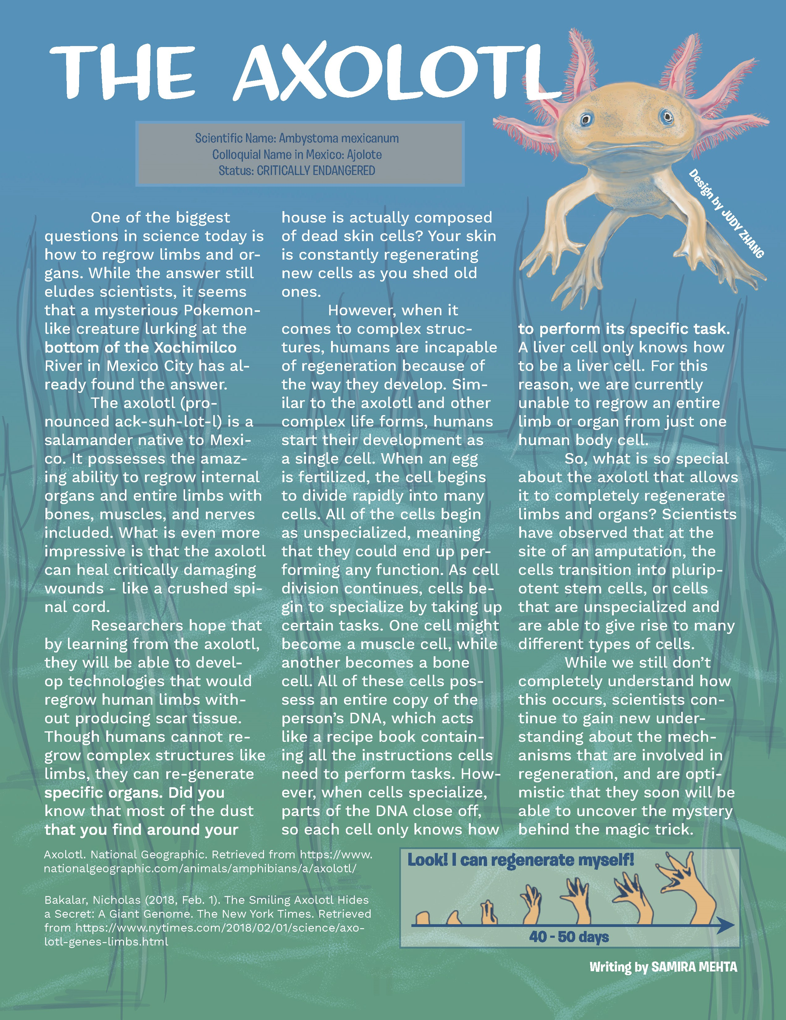 The Axolotl
