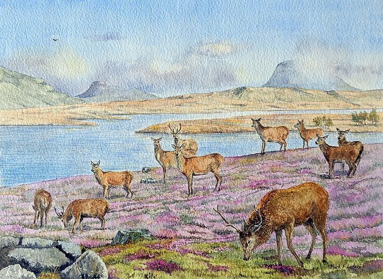 Red Deer, Sutherland