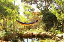 בריכת נוי - creative garden