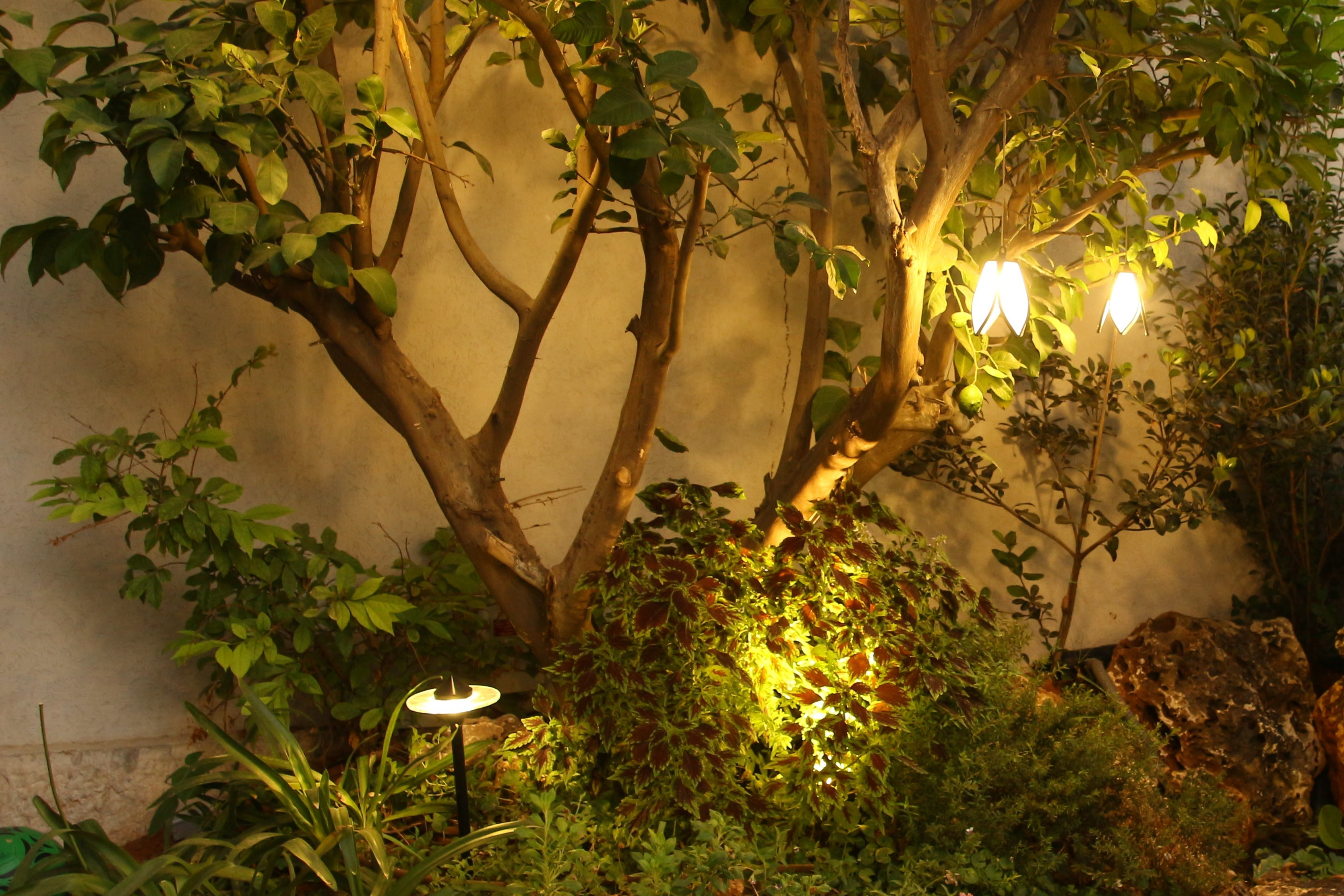 תאורת גן - creative garden