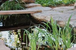 garden-pond-1045473_960_720