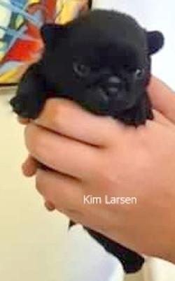 Kim Larsen SOLGT