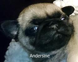 ANDERSINE