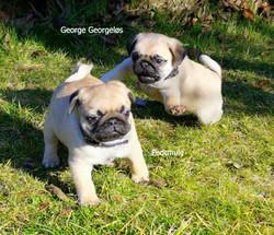 FEDTMULE & GEORG
