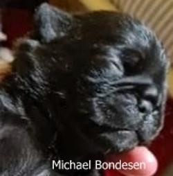 Michael Bondesen 9 dage