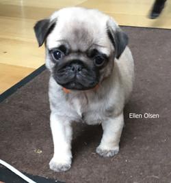 Ellen Olsen