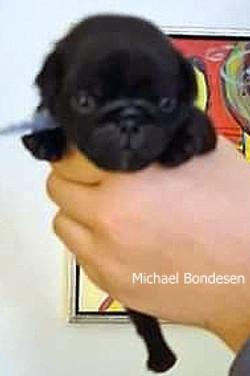 Michael Bondesen 2 uger